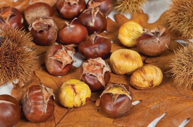 Chestnuts, an autumnal favourite in Catalunya