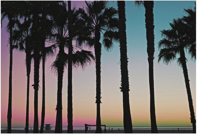 Kino Acosta, Nature. Venice beach, California.png