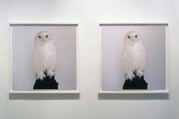 dead owl.jpg