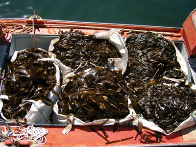 Seaweed home