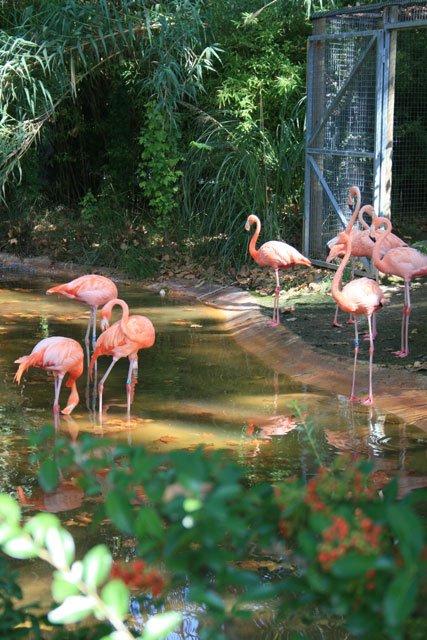 Barcelona Zoo - Flamingo
