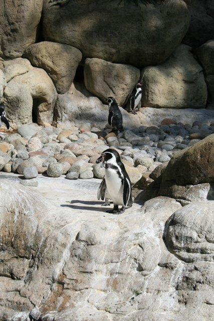 Barcelona Zoo - Penguins