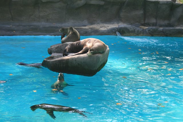 Barcelona Zoo - Sealions