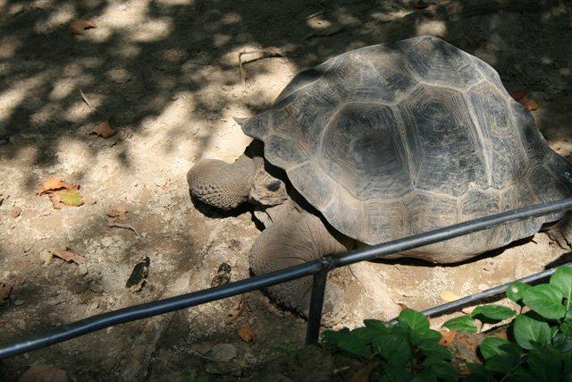 Barcelona Zoo - Tortoise