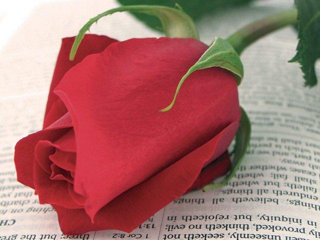 Sant-Jordi-book-&-rose.jpg
