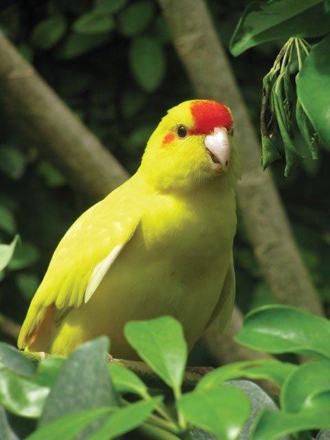 Yellow bird at butterfly park