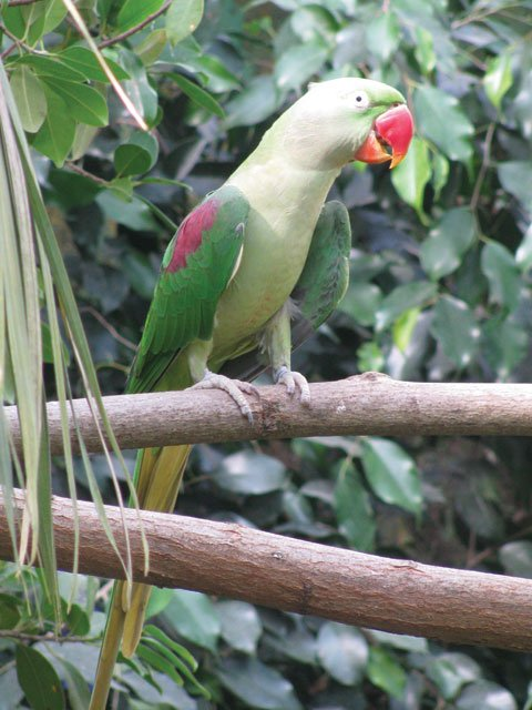 Parrot at butterfly park