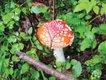 Mushrooms2.jpg
