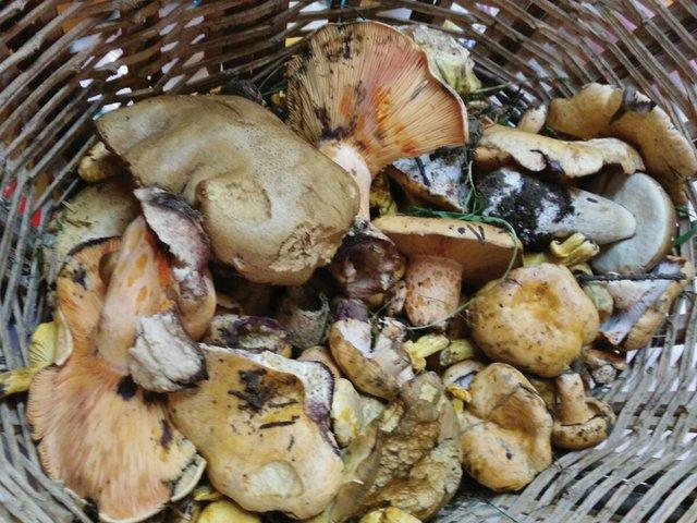 Mushrooms3.jpg