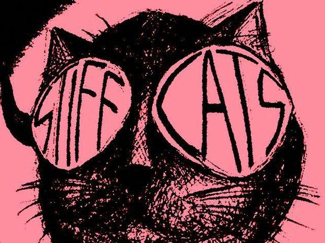 cattt(1).jpg