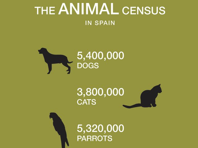 The-animal-census.jpg