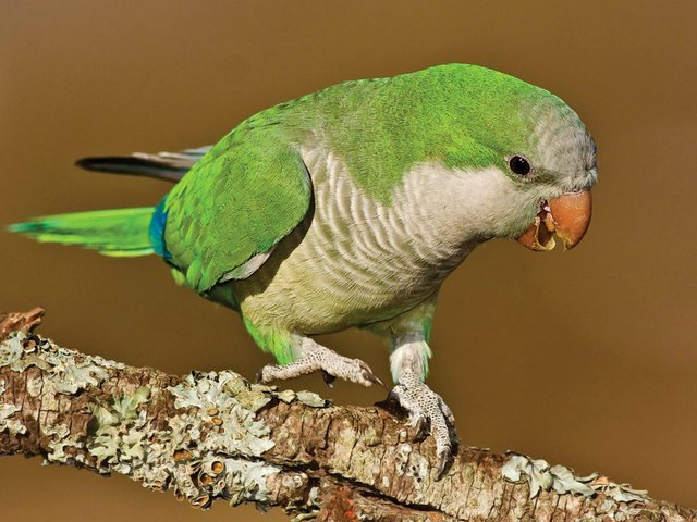 parrot3.jpg