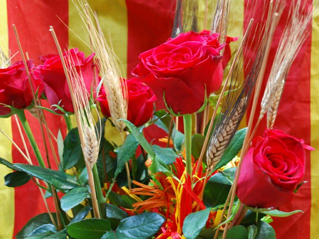 Dia-de-Sant-Jordi-marcove.jpg