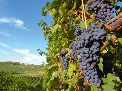 Catalan wines