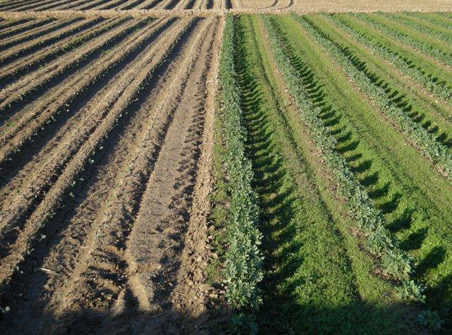 Agrari