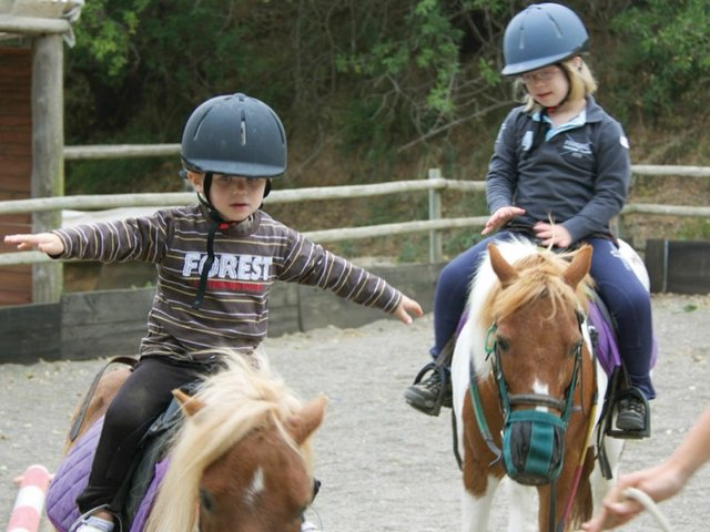 animaltherapyhorses.jpg