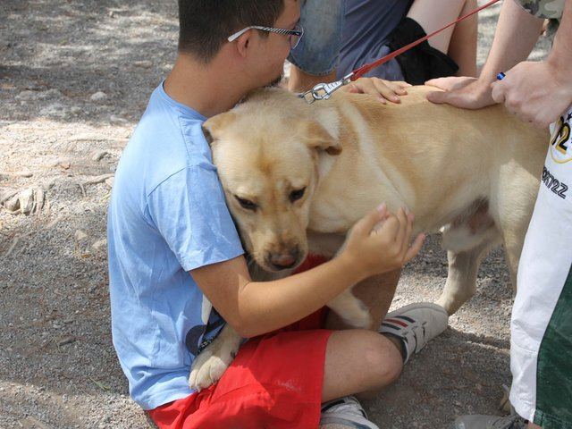 animaltherapy4.jpg