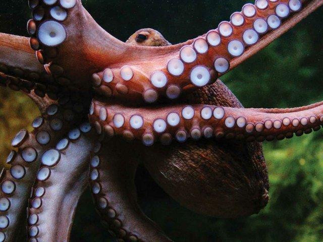 octopus_flickr_damn_unique_mustgivecredit.jpg