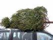 Christmas tree home