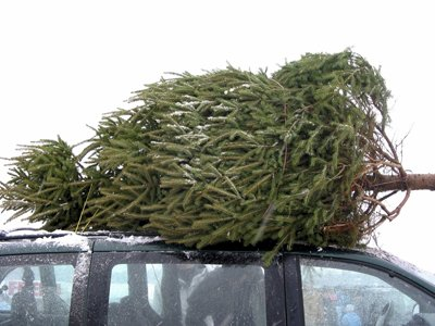 Christmas tree home.jpg