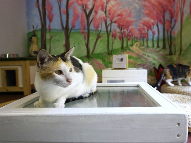CatCafe1-(I-think-this-one's-the-best).jpg