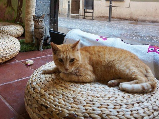 CatCafe3.jpg