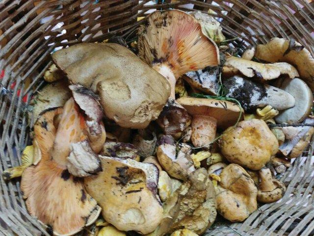mushroom-picking.jpg