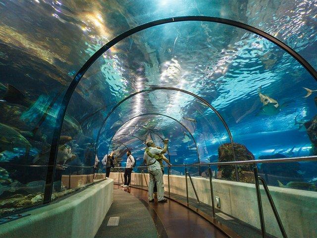 L'Aquarium-de-Barcelonaedit.jpg