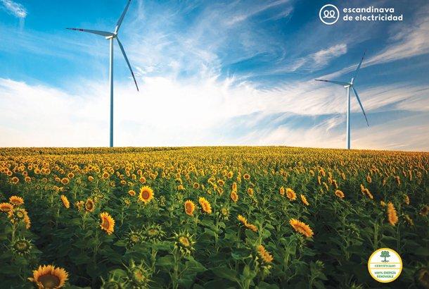 Escandinava-de-Electricidad---M-BCN.jpg