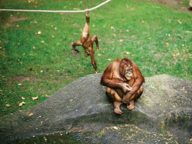 Zoo-Report-monkeys.jpg