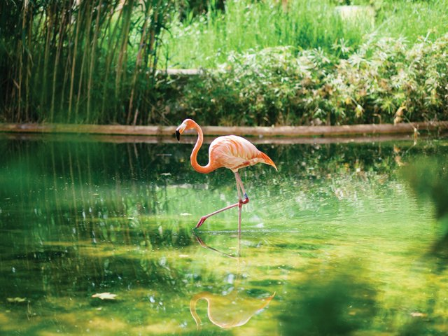 Zoo-Report-flamingo.jpg