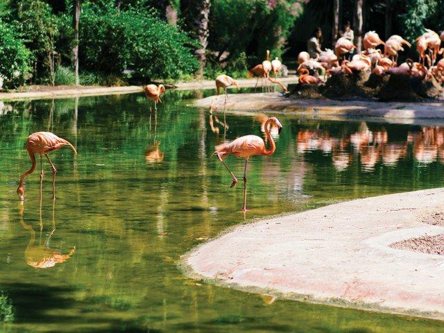 Zoo-Report-flamingo-II.jpg