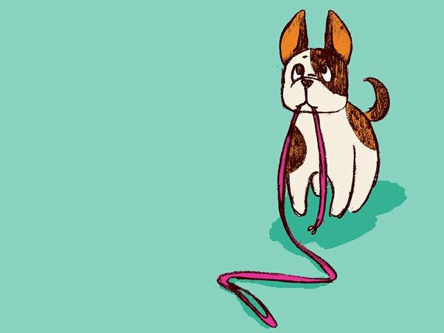 247_BestOf_dogwalks_01.jpg