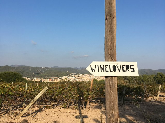 wine_sant-pere-de-ribes.jpg