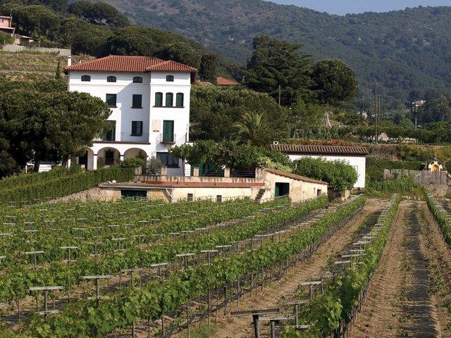 wine_catalonia_alella.jpg