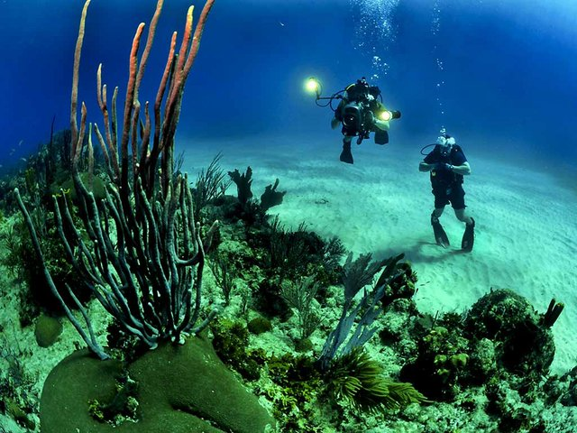 Diving in tthe Illes Medes