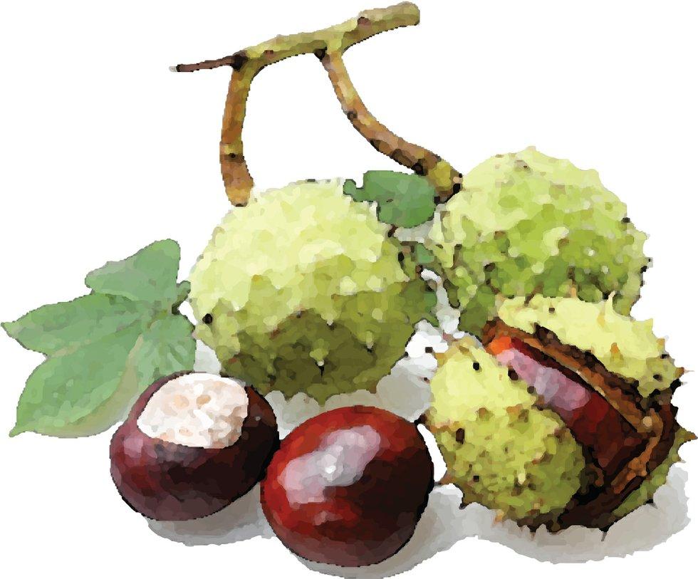 261-five things chestnuts.jpg