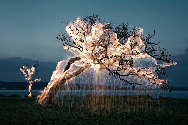 _MG_9018- Tree of a Lucid Dream.jpg