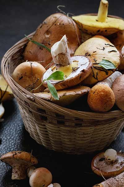 wild-mushrooms-in-basket.jpg