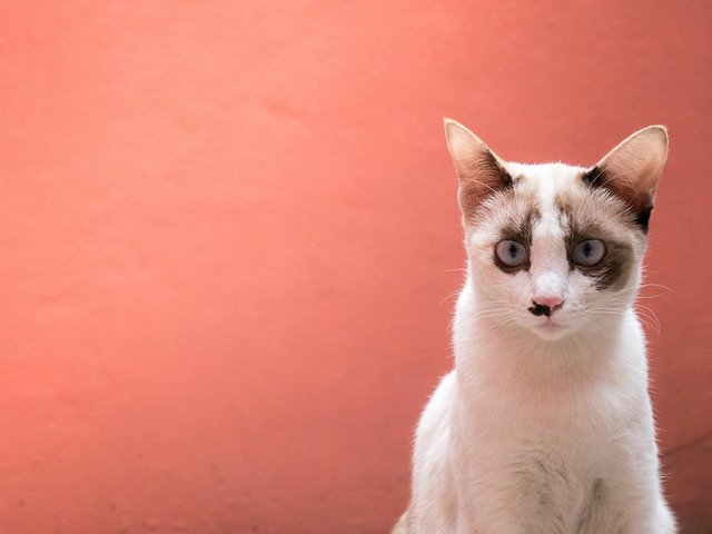 cats-are-showing-gestures-look-camera-with-pink-orange-wall-color-background.jpg