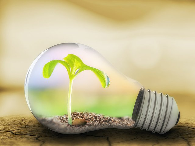 light-bulb-with-sprout-inside.jpg