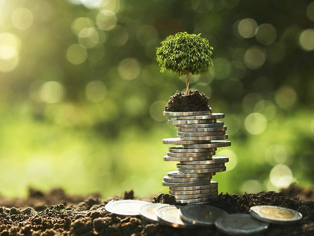tree-growing-coin-stack-nature-with-sunshine.jpg