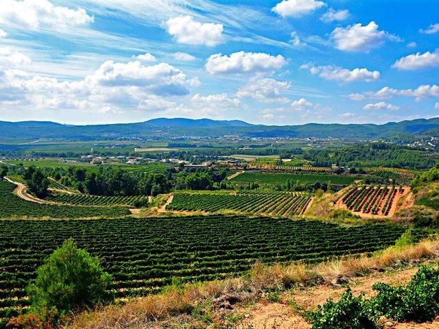Paisatge-del-Penedès-Photo-by-Angela-Llop-(CC-BY-SA-2.0).jpg