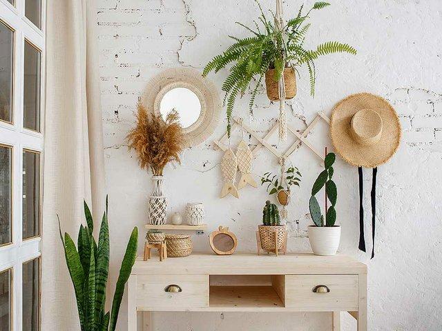 green-plants-dried-flowers-cactuses-table.jpg