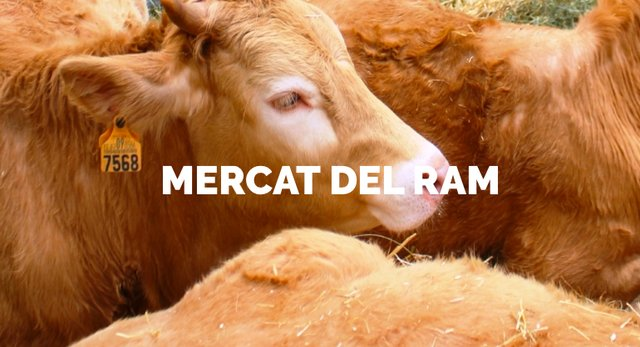Mercat del Ram in Vic