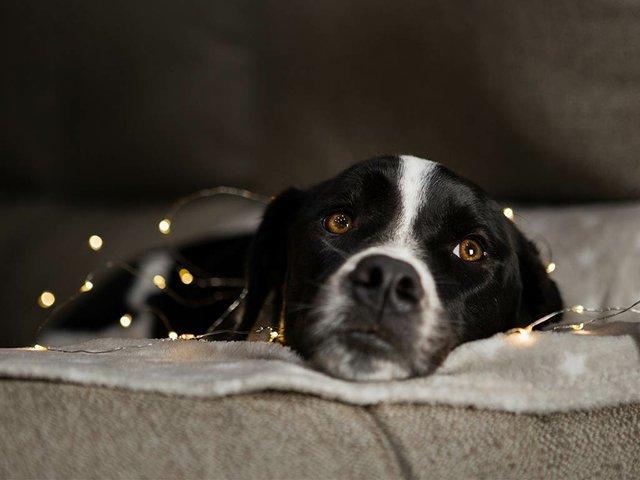 cute-dog-sitting-with-christmas-lights.jpg