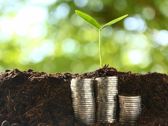 small-trees-pile-coins.jpg