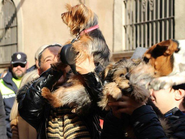 Blessing-of-the-animals-for-Sant-Antoni-January-17,-2019-Ajuntment-de-Vilanova-i-la-Geltrú-(CC-BY-ND-2.0)-01.jpg