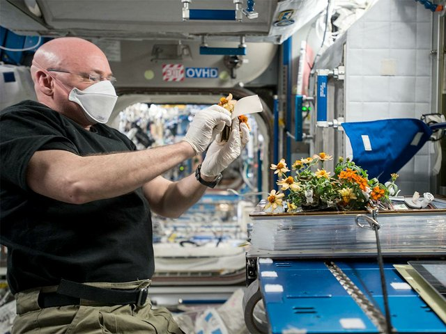 Scott-Kelly-cared-for-two-crops-in-the-Veggie-Plant-Growth-Facility-during-his-year-in-space.jpg