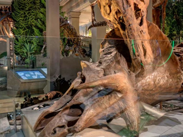 Smithsonian-National-Museum-of-Natural-History-Virtual-Tours.jpg